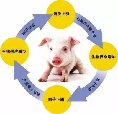 消费端供应回暖,集中消费的复苏,猪市场波段猪价反弹可期?!